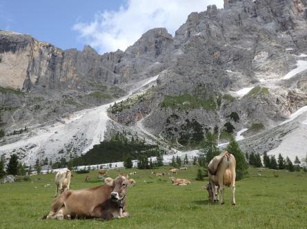 ヴァッレス峠からセガンティーニ小屋へ。_f0161652_00240064.jpg
