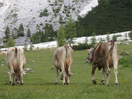 ヴァッレス峠からセガンティーニ小屋へ。_f0161652_00281132.jpg