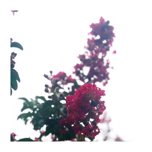 f0156861_10530463.jpg