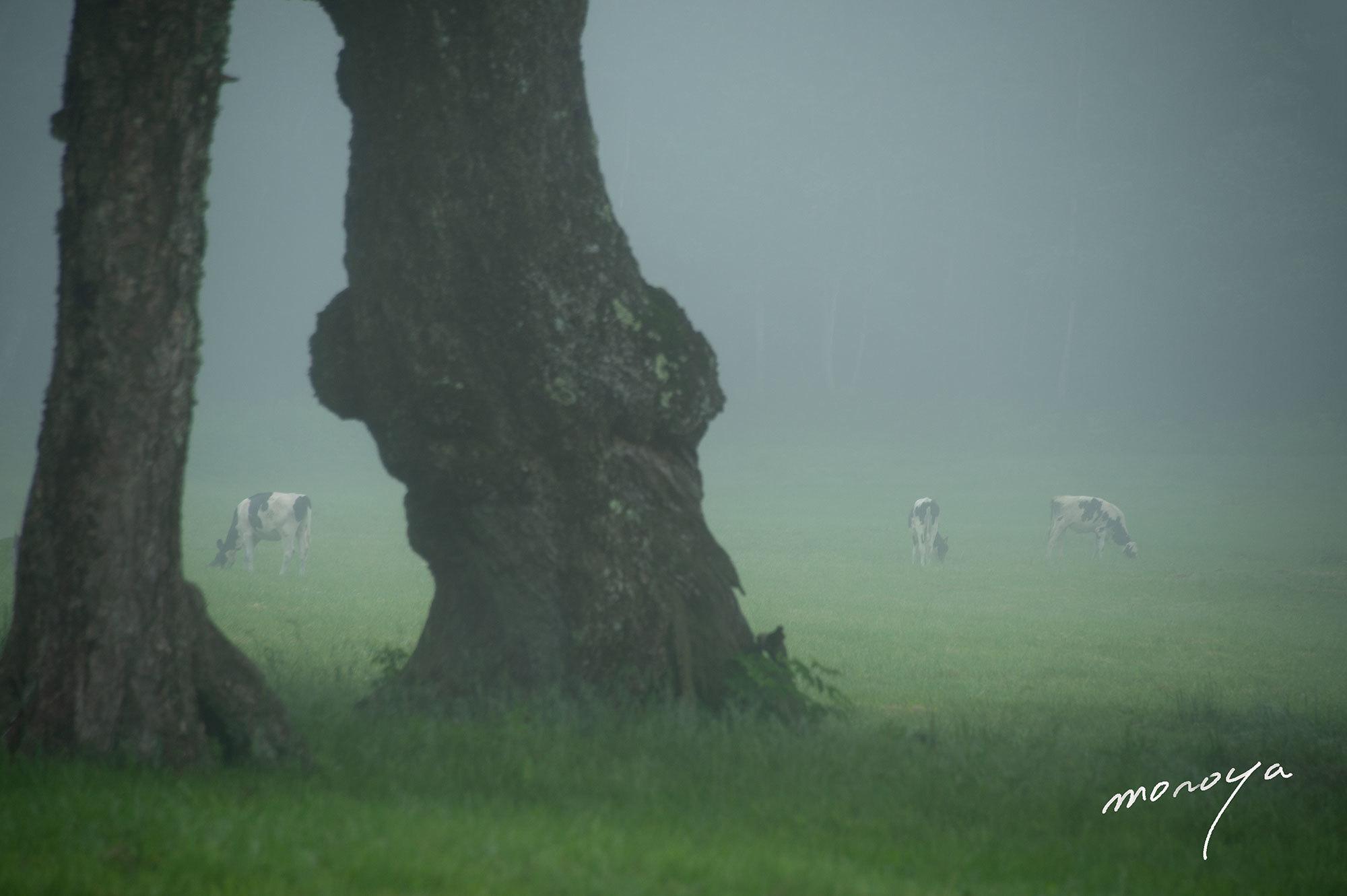 霧の牧場_c0085877_06043761.jpg