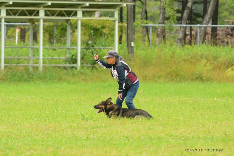 JKC訓練競技会・クヴァ追求_f0067179_20430403.jpg