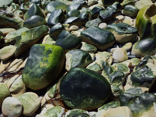 青海苔おにぎり奇石_f0377679_19260026.jpg