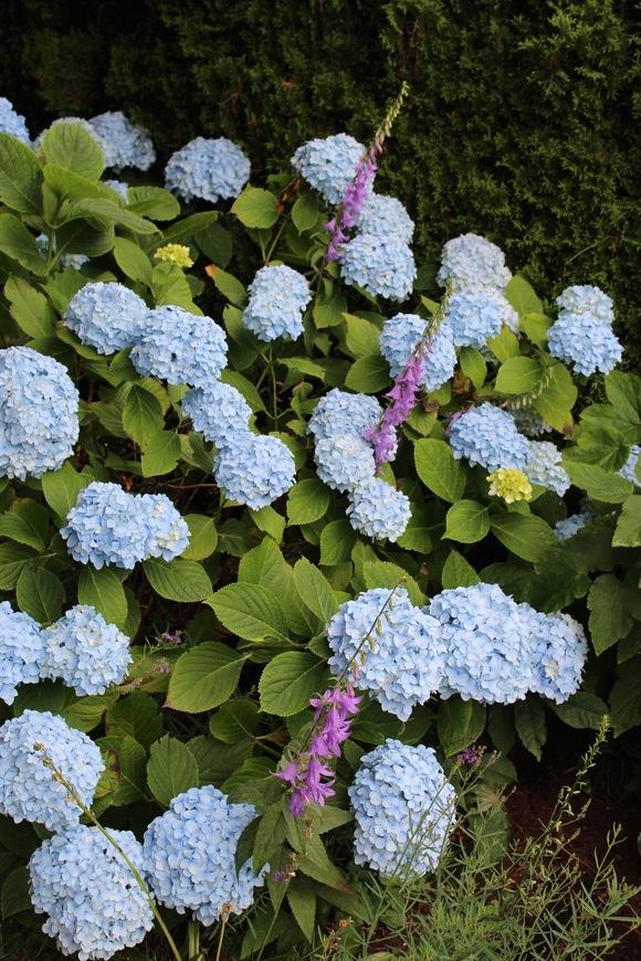 紫陽花の季節にぽっかりと。_d0129786_146439.jpg