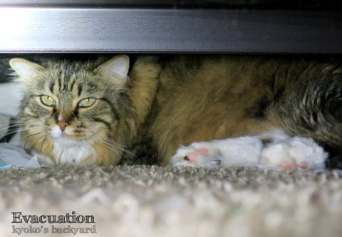 ベッドの下に避難中 / マダニ取りのスプーンを購入_b0253205_05253874.jpg