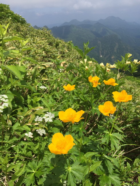 "2019年7月 『青春の思い出 ー 芦別岳 1726m』 July 2019 ""Mt Ashibetsu, my sentimental mountain\""_c0219616_19031090.jpg"