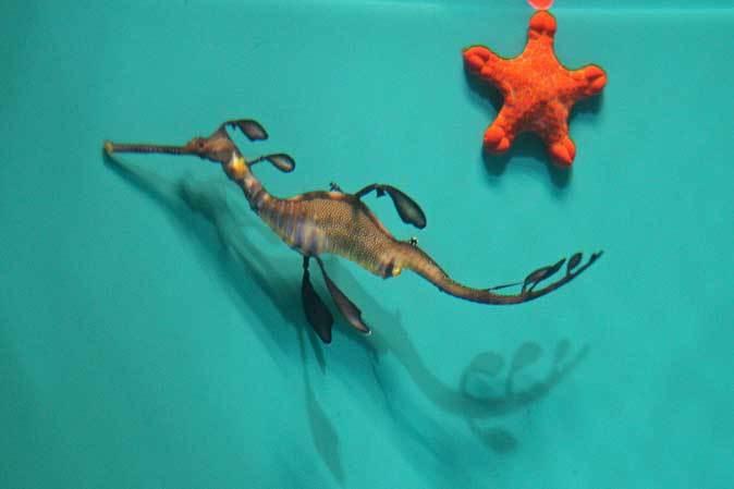 葛西臨海水族園:オーストラリア西部~ドラゴンとゴブリン_b0355317_22295493.jpg
