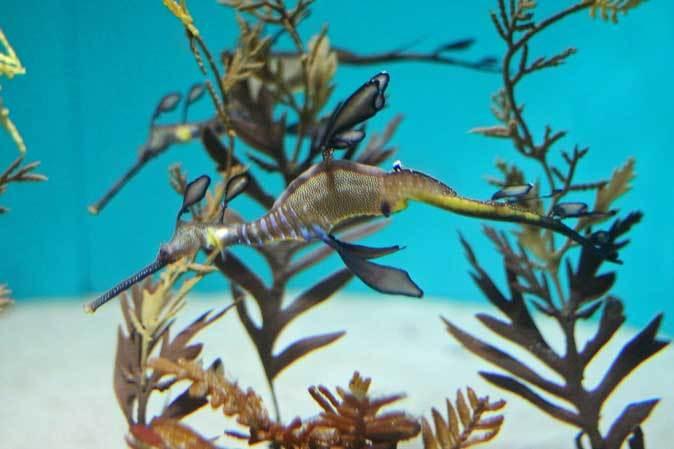 葛西臨海水族園:オーストラリア西部~ドラゴンとゴブリン_b0355317_22343588.jpg