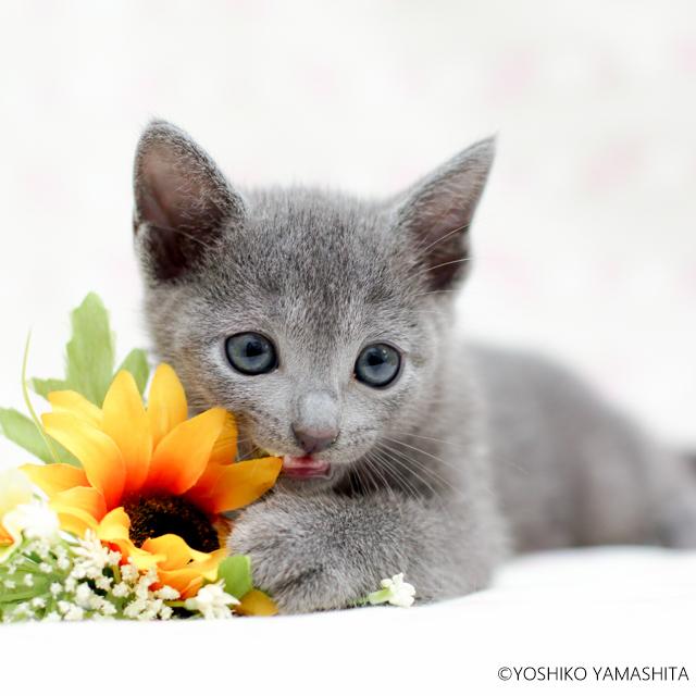 2020 子猫カレンダー_f0031022_11530506.jpg
