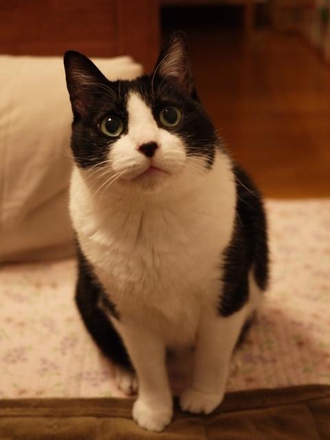 お誕生日猫 空永遠の20歳編。_a0143140_21114377.jpg