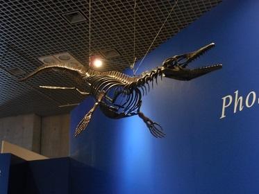 『恐竜博2019』_e0033570_11203834.jpg