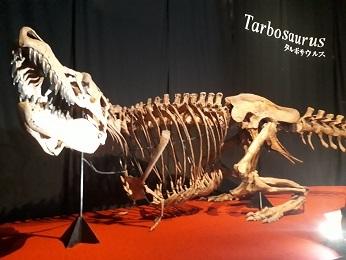 『恐竜博2019』_e0033570_11234790.jpg