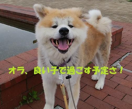 f0121712_23363626.jpg