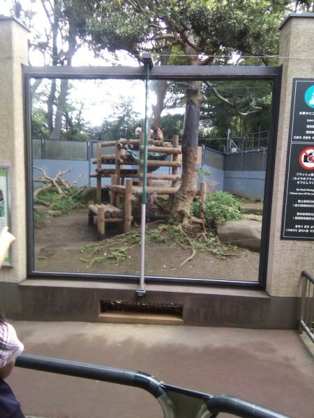 上野動物園のパンダ_a0116217_00582458.jpg