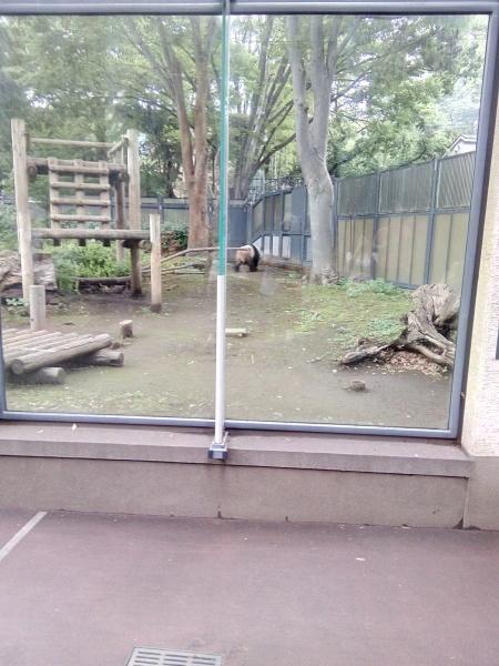 上野動物園のパンダ_a0116217_01045172.jpg