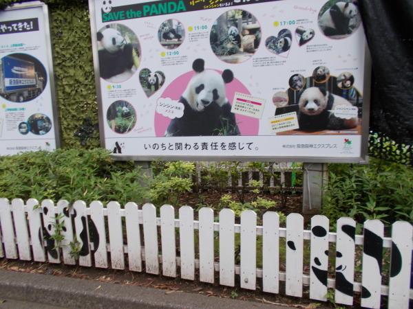 上野動物園のパンダ_a0116217_01090373.jpg
