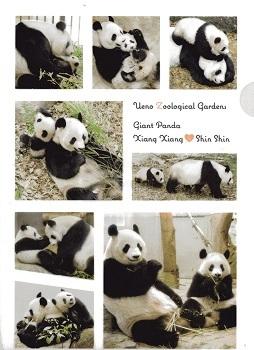 上野動物園のパンダ_a0116217_01162393.jpg