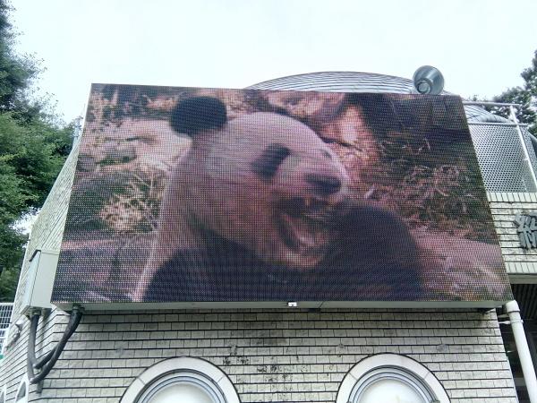 上野動物園のパンダ_a0116217_01263555.jpg