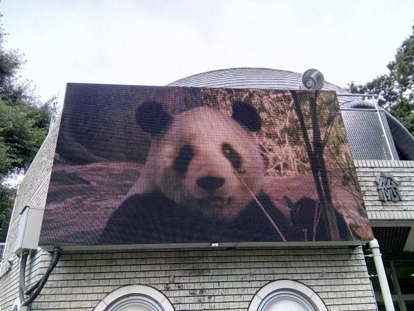 上野動物園のパンダ_a0116217_01320446.jpg