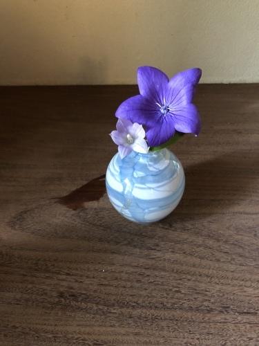 大輪のアガパンサスと咲き分けの桔梗_a0197730_15035692.jpeg