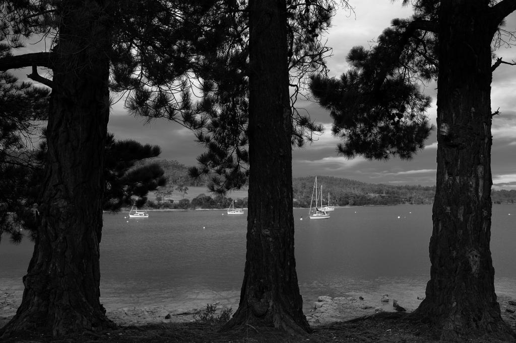 キャンプの朝 Bluny Island  Tasmania  6月28日_f0050534_23204366.jpg