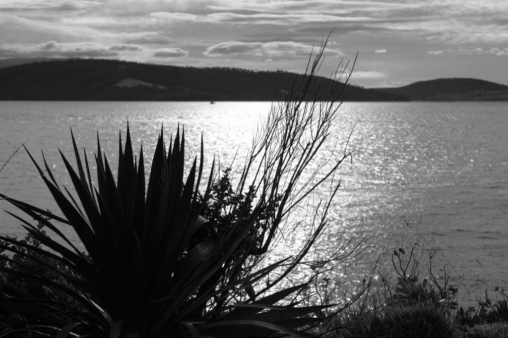 キャンプの朝 Bluny Island  Tasmania  6月28日_f0050534_23361167.jpg