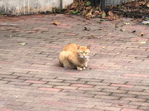 キモい食材の写真最初だと、怒られそうなので、まずは可愛くもない猫の写真_d0057843_20245095.jpg