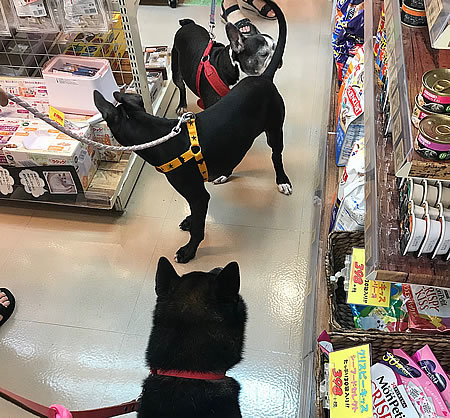 珍しい黒犬3ショット_e0362456_19025364.jpg