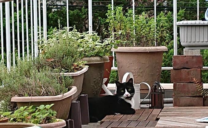 ハチワレの招き猫♪_f0374160_21320372.jpg