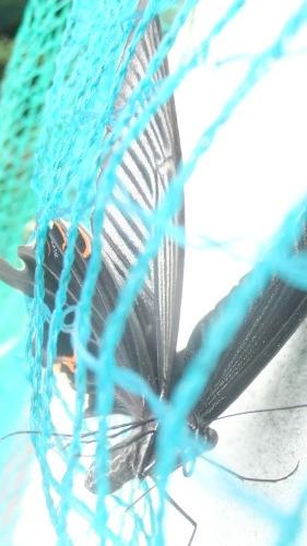 オモニの祖は日本人_f0253572_15104029.jpg