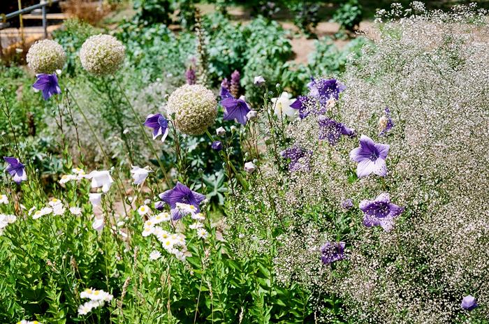 夏花盛りだくさんの畑と参議院議員投票_c0182775_17104452.jpg