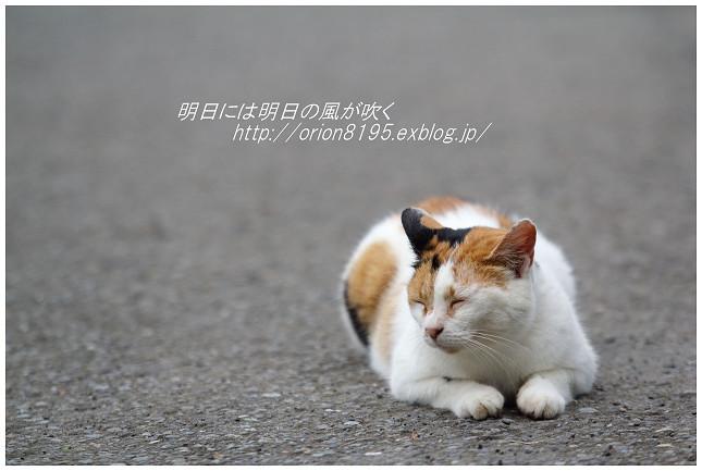 f0361079_20381912.jpg