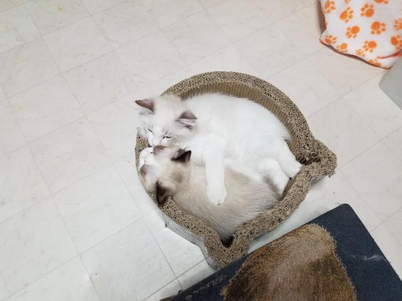 生後3ヵ月のラブラブショット♪&今日の子猫_a0188883_16292973.jpg