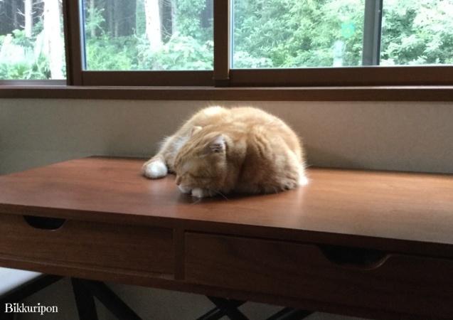 猫ですけど_d0344913_09232283.jpg