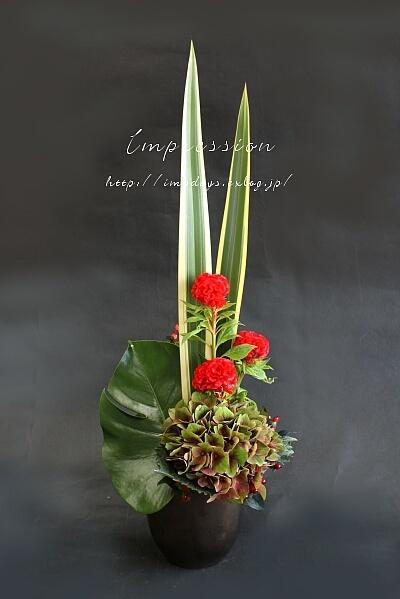 定期装花から ケイトウ:サカタプライド_a0085317_03435789.jpg