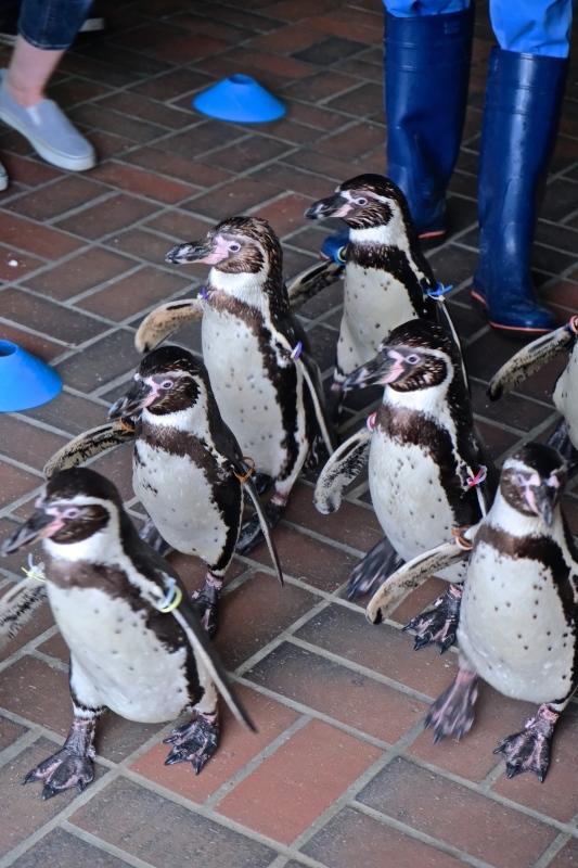 ぺンギン水族館 つづき_f0315034_12421729.jpg