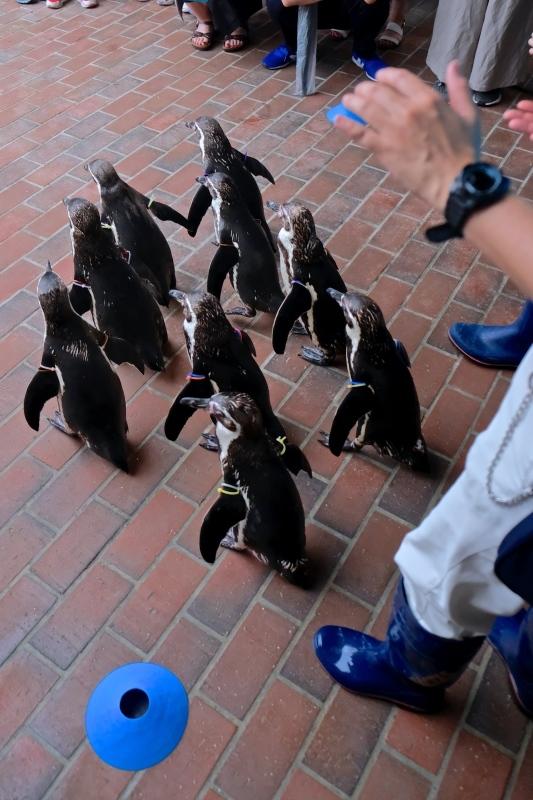 ぺンギン水族館 つづき_f0315034_12423694.jpg