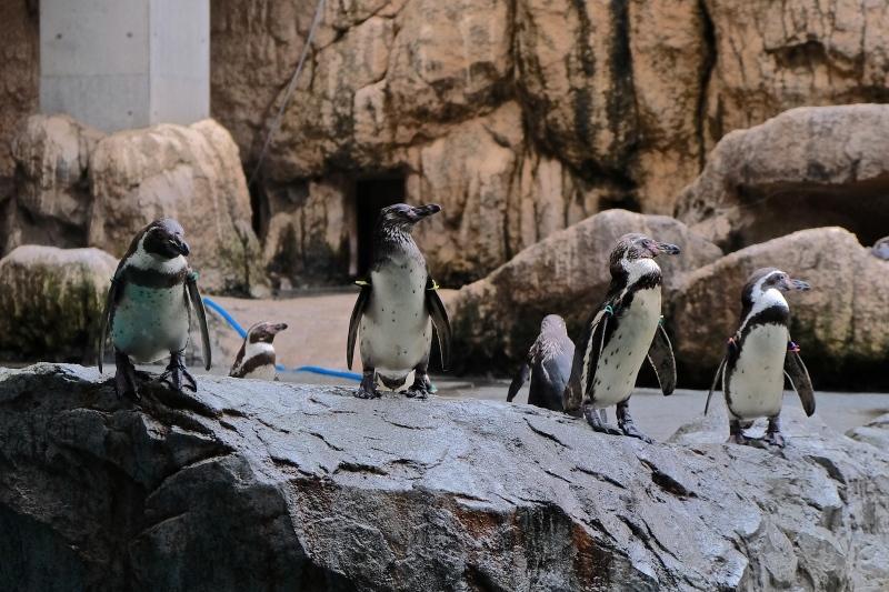 ぺンギン水族館 つづき_f0315034_12481137.jpg