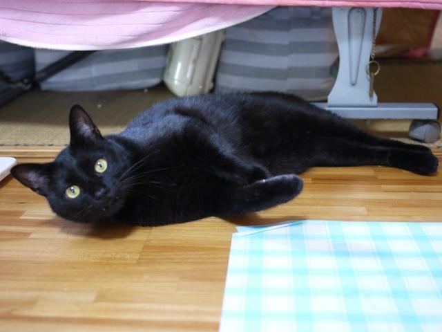 猫のお留守番 レオくん編。_a0143140_20371842.jpg