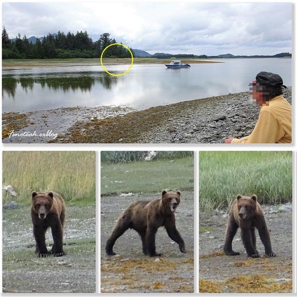 HILTON へお泊り 熊を観る _d0356844_12382354.jpg