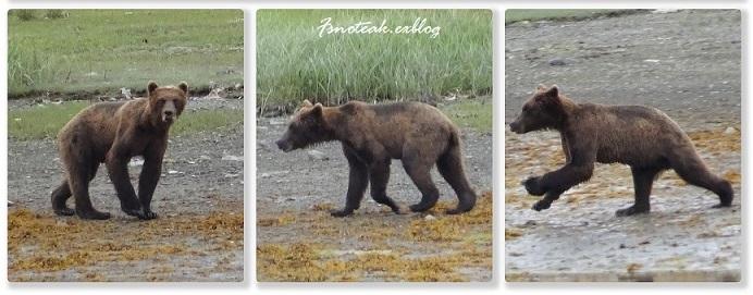 HILTON へお泊り 熊を観る _d0356844_12394578.jpg