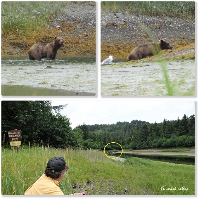 HILTON へお泊り 熊を観る _d0356844_12420979.jpg