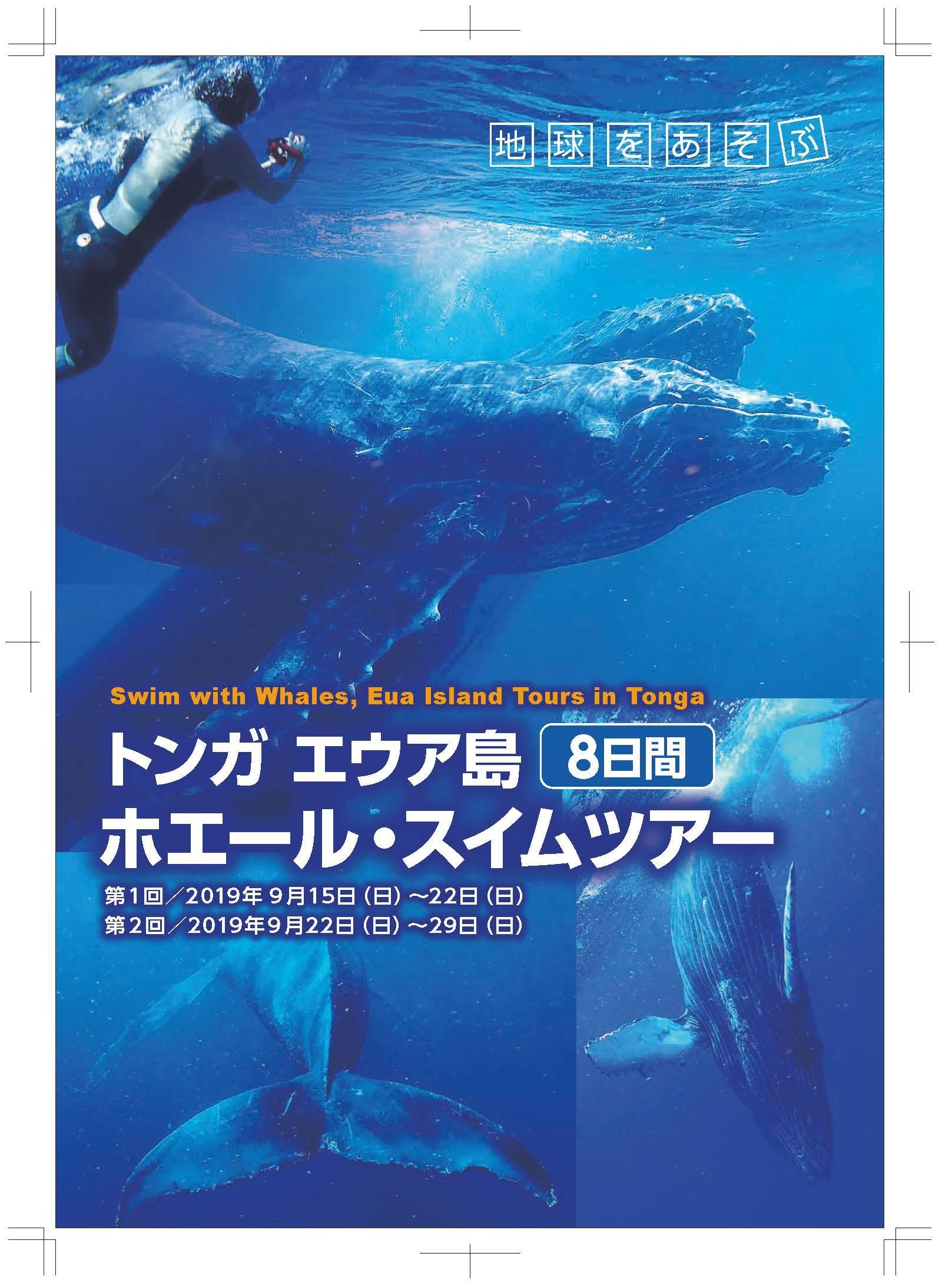 参議院選挙とクジラと泳ぐトンガツアー_d0115650_02075157.jpg