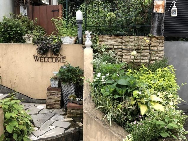 アプローチ花壇、植え込み(エキナセア'グリーンエンジェル'、ベロニカ)のその後_a0243064_12524906.jpg