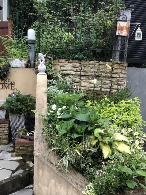 アプローチ花壇、植え込み(エキナセア'グリーンエンジェル'、ベロニカ)のその後_a0243064_12531793.jpg