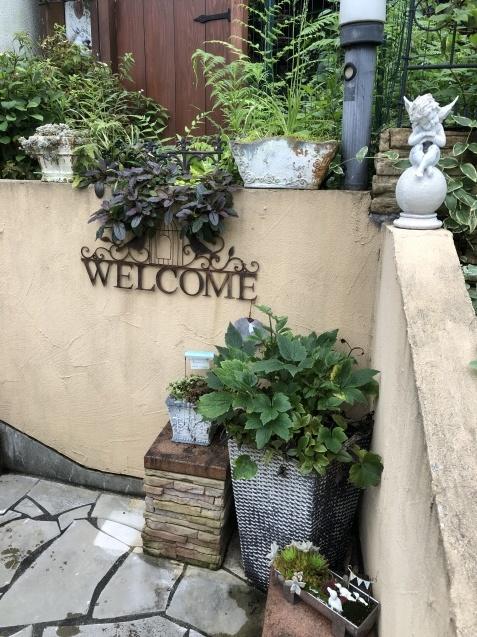 アプローチ花壇、植え込み(エキナセア'グリーンエンジェル'、ベロニカ)のその後_a0243064_12583724.jpg