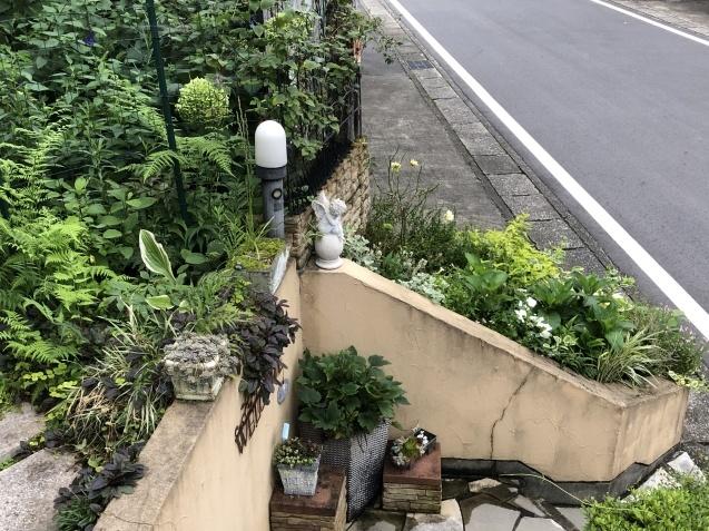 アプローチ花壇、植え込み(エキナセア'グリーンエンジェル'、ベロニカ)のその後_a0243064_13001558.jpg