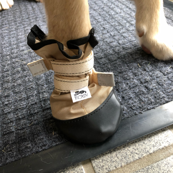 幸太くんのお靴♪_c0028792_20283933.jpg