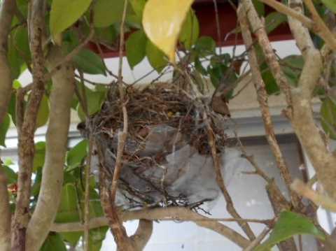 ズッキーニとポテトのミートグラタン&玄関そばにムクドリの巣_f0019498_18032382.jpg