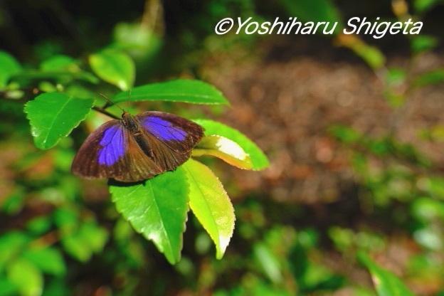 〜森の妖精〜_c0152400_10232521.jpg