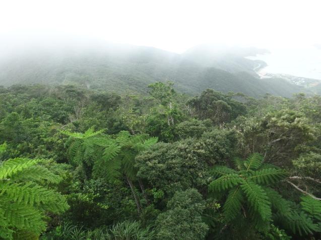 奄美大島の植物たち_b0196913_22362434.jpg